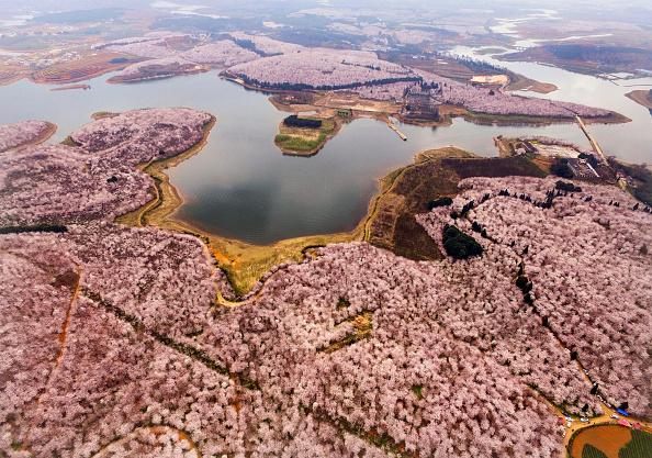 ヒューマンインタレスト「Aerial View Of Sea Of Flowers In Guiyang」:写真・画像(0)[壁紙.com]
