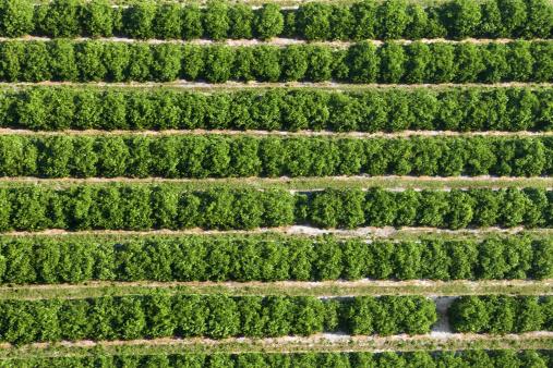Grove「Aerial view of Florida orange grove」:スマホ壁紙(10)