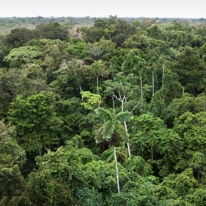 Amazon Rainforest「Aerial view of Amazon Rain forest」:スマホ壁紙(19)