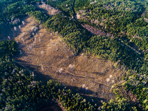 Aerial View over Deforestation:スマホ壁紙(壁紙.com)
