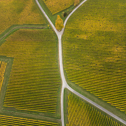 Country Road「Aerial view of vineyards and fork in the road」:スマホ壁紙(10)