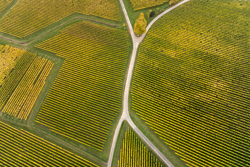 Fork「Aerial view of vineyards and fork in the road」:スマホ壁紙(15)