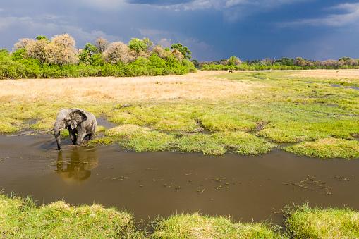 Approaching「Aerial view of a male elephant, Okavango Delta, Botswana, Africa」:スマホ壁紙(4)