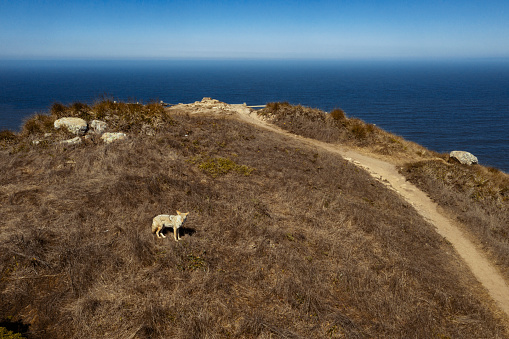California State Route 1「Aerial view Road trip Point Reyes.」:スマホ壁紙(3)