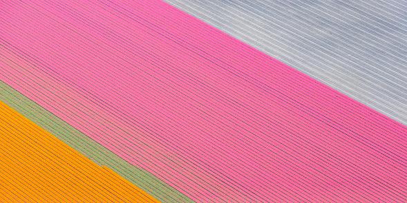 花畑「オランダの春の花をオレンジとピンクのチューリップの分野の空中写真」:スマホ壁紙(16)