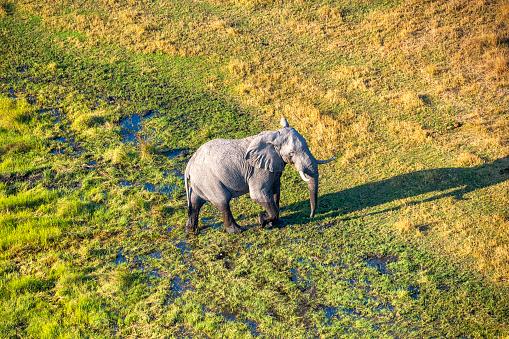 Approaching「Aerial view of an elephant, Okavango Delta, Botswana, Africa」:スマホ壁紙(9)