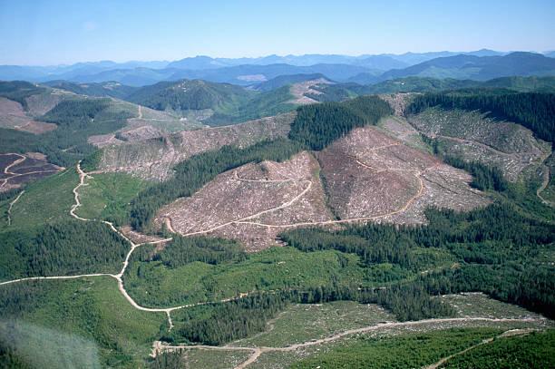 Aerial View of Clear Cut Logging:スマホ壁紙(壁紙.com)