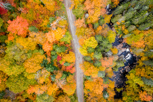 Urban Road「Aerial View Empty road leading trough beautiful colorful autumn forest in sunny fall」:スマホ壁紙(12)