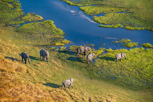 Drinking「Aerial view of elephants, Okavango Delta, Botswana, Africa」:スマホ壁紙(5)