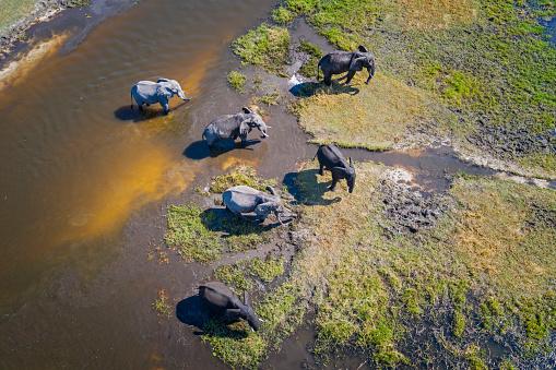 Elephant「Aerial view of elephants, Okavango Delta, Botswana, Africa」:スマホ壁紙(12)
