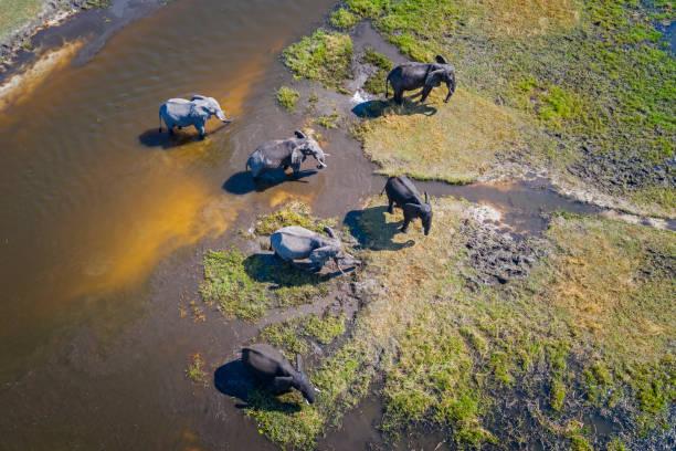 Aerial view of elephants, Okavango Delta, Botswana, Africa:スマホ壁紙(壁紙.com)