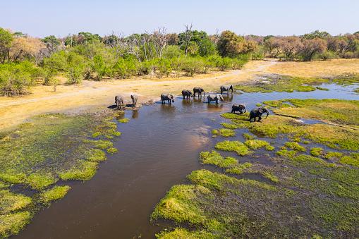 Botswana「Aerial view of elephants, Okavango Delta, Botswana, Africa」:スマホ壁紙(16)