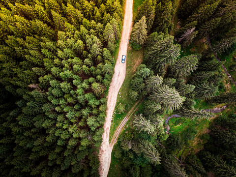 Carpathian Mountain Range「Aerial view of car on winding forest road in wilderness」:スマホ壁紙(6)