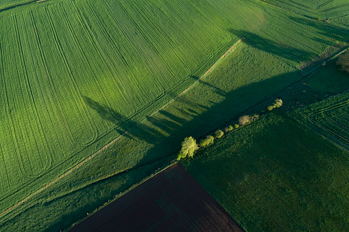 Crop - Plant「Aerial View of abstract landscape with agricultural fields, trees and meadow at springtime. Franconia, Bavaria, Germany.」:スマホ壁紙(13)