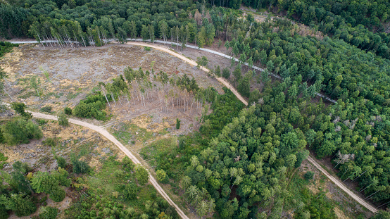Parasitic「Aerial view of dead trees - forest dieback - Waldsterben, Germany」:スマホ壁紙(9)