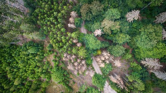 Aisle「Aerial view of dead trees - forest dieback - Waldsterben, Germany」:スマホ壁紙(9)