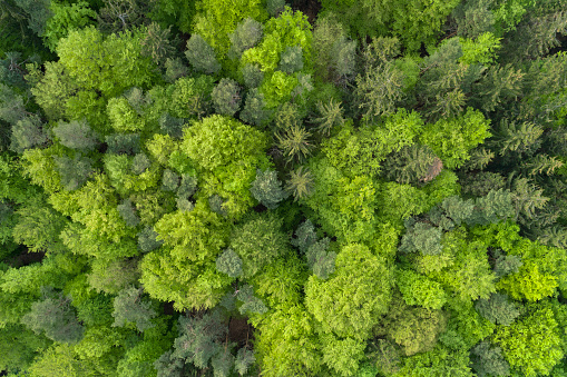 Drone Point of View「Aerial view of forest with fresh vital leaves directly from above in early springtime. Franconia, Bavaria, Germany.」:スマホ壁紙(7)