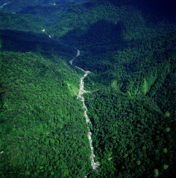 Aerial view of forest with river and big rocks:スマホ壁紙(壁紙.com)