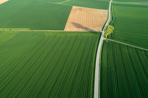 The Way Forward「Aerial view of rural road with tree through agricultural fields. Franconia, Bavaria, Germany.」:スマホ壁紙(13)