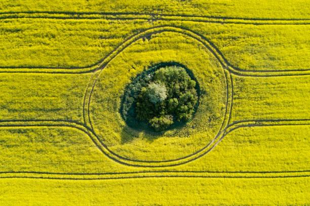 Aerial view of oilseed rape field with trees inside, springtime. Mecklenburg-Vorpommern, Mecklenburg Western Pomerania, Germany.:スマホ壁紙(壁紙.com)