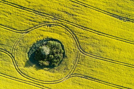 Grove「Aerial view of oilseed rape field with trees inside, springtime. Mecklenburg-Vorpommern, Mecklenburg Western Pomerania, Germany.」:スマホ壁紙(3)