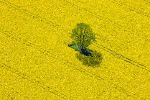 Oilseed Rape「Aerial View of Oilseed Rape Field located in Germany」:スマホ壁紙(7)
