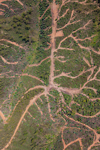 Deforestation「Aerial view of forestry access roads in de-forested area, Huelva Province, Spain」:スマホ壁紙(2)
