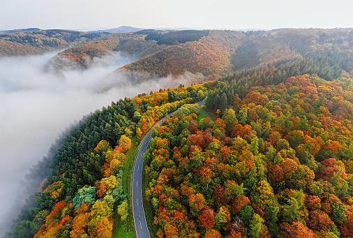 Hairpin Curve「Aerial view of autumn forest road in morning fog. Mosele Valley, Germany.」:スマホ壁紙(0)