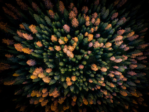 Larch Tree「Aerial view of autumn forest, Puster Valley, South Tyrol, italy」:スマホ壁紙(16)