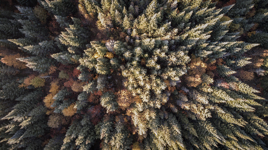 Leisure Activity「Aerial View of Autumn Forest Nature, Quebec, Canada」:スマホ壁紙(13)