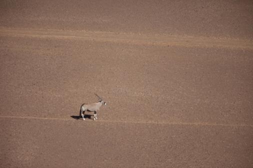 Gemsbok「Aerial view of Gemsbok (Oryx gazella) standing in desert, Namibia」:スマホ壁紙(2)