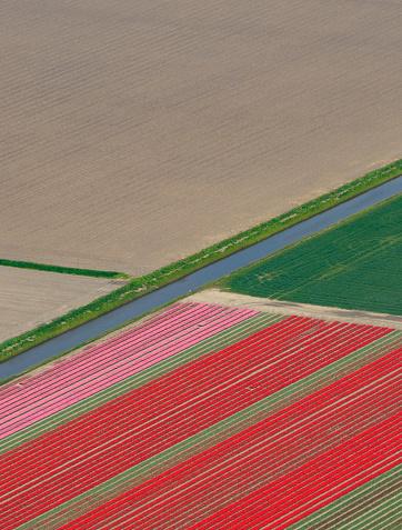 花畑「航空写真チューリップフィールドに成長春にのホランド」:スマホ壁紙(7)