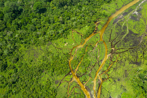 Rainforest「Aerial view of a bai (saline, mineral clearing) in the rainforest, Congo」:スマホ壁紙(13)