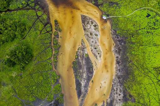 Democratic Republic of the Congo「Aerial view of a bai (saline, mineral clearing) in the rainforest, Congo」:スマホ壁紙(10)