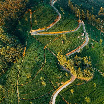 Sri Lanka「Aerial view on tea plantation in Sri Lanka」:スマホ壁紙(19)