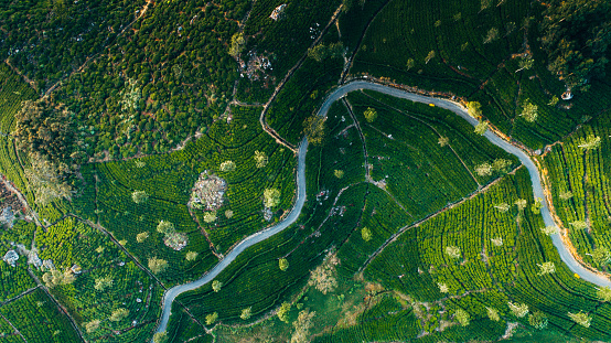 Sri Lanka「Aerial view on tea plantation in Sri Lanka」:スマホ壁紙(10)