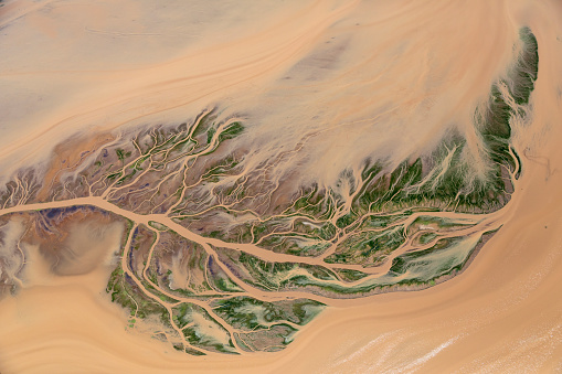 Algae「Aerial view of fern shaped river delta」:スマホ壁紙(9)