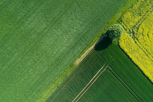 chestnut「Aerial view of rural landscape with Chestnut tree at agricultural fields. Franconia, Bavaria, Germany.」:スマホ壁紙(18)