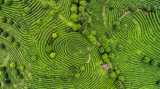 South Asia「Aerial view of Tea fields」:スマホ壁紙(0)