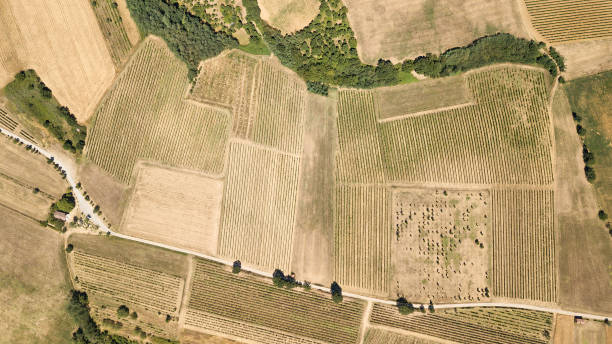 Aerial view of a vineyard in Piedmont - Italy:スマホ壁紙(壁紙.com)