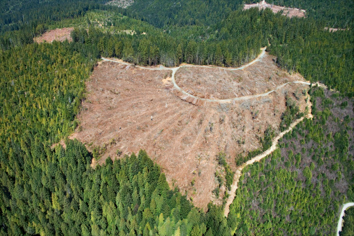 Lumber Industry「Aerial view of clear-cut forest」:スマホ壁紙(2)