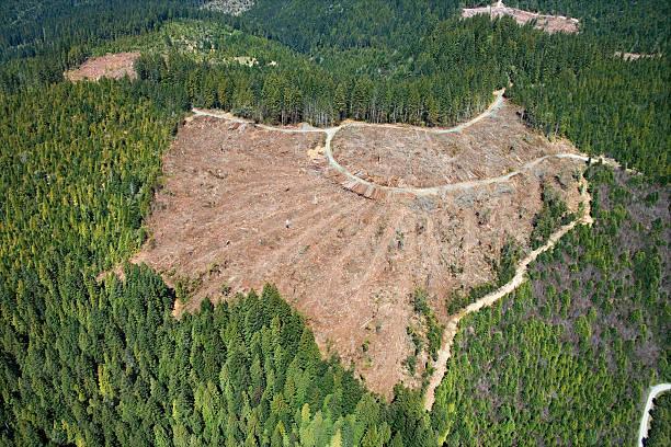 Aerial view of clear-cut forest:スマホ壁紙(壁紙.com)