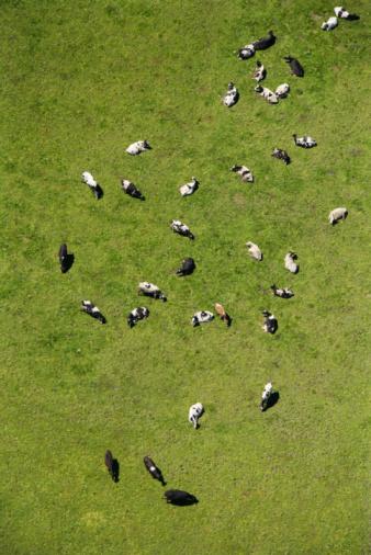 Pasture「Aerial view of livestock in field」:スマホ壁紙(19)