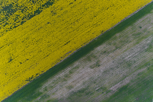 アブラナ「Aerial view of fields, Skopje, Macedonia」:スマホ壁紙(5)