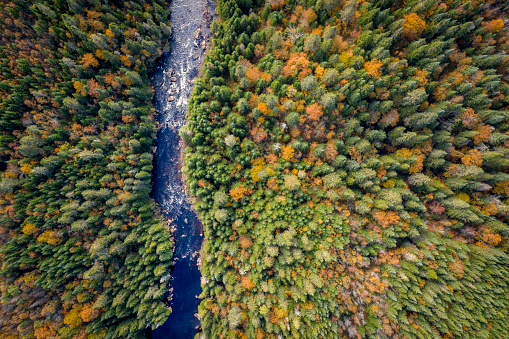 Boreal Forest「Aerial View of Boreal Forest Nature in Autumn Season, Quebec, Canada」:スマホ壁紙(10)