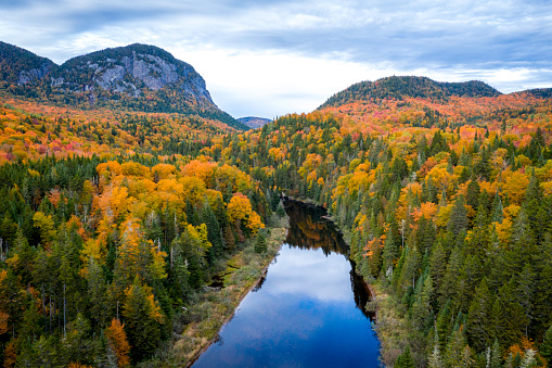 Boreal Forest「Aerial View of Boreal Forest Nature in Autumn Season, Quebec, Canada」:スマホ壁紙(7)