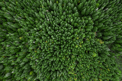 Tundra「Aerial View of Boreal Forest Nature in Autumn Season, Quebec, Canada」:スマホ壁紙(8)