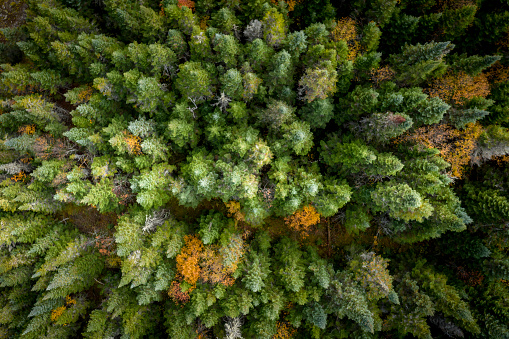 Tundra「Aerial View of Boreal Forest Nature in Autumn Season, Quebec, Canada」:スマホ壁紙(15)