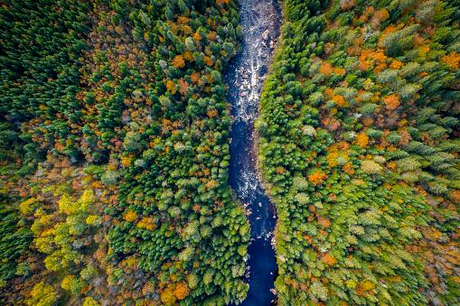 秋「自然林と秋の紅葉シーズン、ケベック州、カナダ川の空撮」:スマホ壁紙(5)