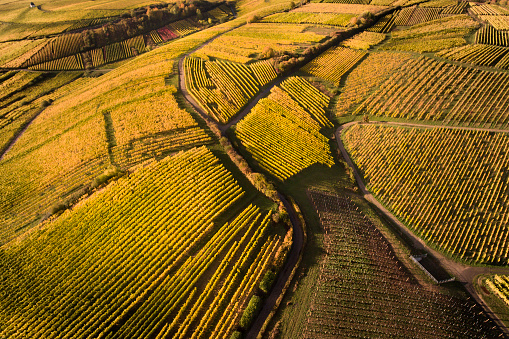 Hesse - Germany「Aerial view of autumnal vineyards」:スマホ壁紙(10)